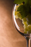 Grapes on wine glass. Vine grapes on wine glass Royalty Free Stock Images