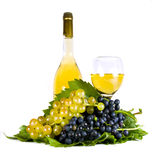 Grapes and wine isolated on white. Autumn still life with grapes and wine Royalty Free Stock Images