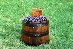 Grapes in wood barrel Stock Photos