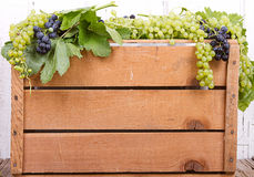 Grapes on wooden crate Stock Photos