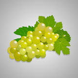 Grapes yellow illustration Royalty Free Stock Images