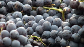 Grapes zoomed out Royalty Free Stock Photography
