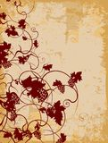 Grapevine. Abstract grapevine design on antique paper Stock Photography