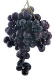 Grapevine. Black grape isolated over white background stock photography