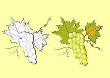 Grapevine. Decorative illustration with  grapevine on yellow background Stock Images