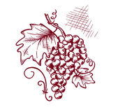 Grapevine. Graphic illustration of a bunch of grapes royalty free illustration