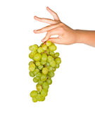 Grapevine Royalty Free Stock Image