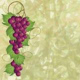 Grapevine Royalty Free Stock Photo
