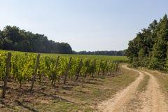 grapevine Стоковые Фото