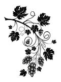 Grapevine. With scrolls and leaves Royalty Free Stock Photo