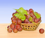Grapevine in basket Stock Photos