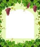 Grapevine border. Decorative frame made with ripe pink grape clusters and fresh green grapevine royalty free stock photography
