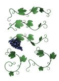 Grapevine decoration Royalty Free Stock Photography