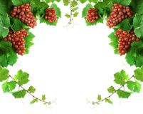 Grapevine decoration border Stock Images