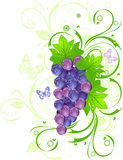 Grapevine with drops Royalty Free Stock Photography