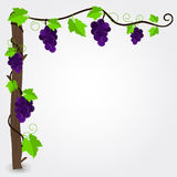 Grapevine frame Royalty Free Stock Photos