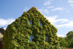 Grapevine house. Image of a house with lush grapevine foliage Royalty Free Stock Images