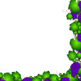 Grapevine illustration Royalty Free Stock Image