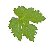 Grapevine leaf Royalty Free Stock Image