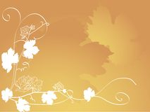 Grapevine leaves Stock Photo