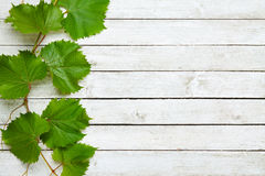 Grapevine leaves on wooden background Royalty Free Stock Images