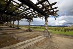 Grapevine Pergola. Grape vines around a pergola and in the background Stock Photography