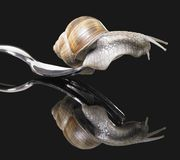 Grapevine snail on fork Royalty Free Stock Photography