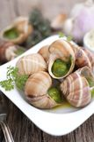 Grapevine snails Royalty Free Stock Image