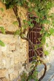 Grapevine on stony house. A thick brown and green grape vine is tethered and growing up the outside of a beige stone sandstone limestone block house Stock Photo