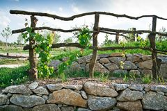Grapevine Trellis on Terrace Royalty Free Stock Photos