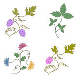 Grapevine. Vector wine design elements, a set Stock Photo