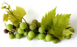 Grapevine (vitis vinifera) - berries with leaves. Royalty Free Stock Photos