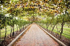 Grapevine walkway. A long brick walkway under a grapevine Arbor Royalty Free Stock Photography