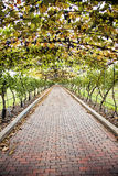 Grapevine walkway. A long brick walkway under a grapevine trellis Royalty Free Stock Photography