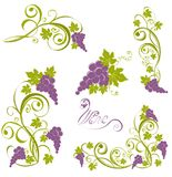 Grapevine. Wine design elements Royalty Free Stock Photo