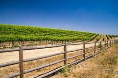 Grapevines of California Stock Photos