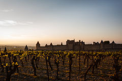 Grapevines glow in sunset walled city ramparts Stock Images