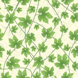 Grapevines in  pattern Stock Photo