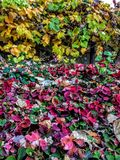 Grapevines and Strawberry Plants at the turn of fall background abstract Stock Photography