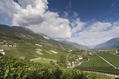 Grapevines on the slopes of Rhone valley in Valais, Switzerland Royalty Free Stock Images