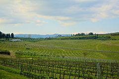 Grapevines winery Tuscany Italy Stock Images