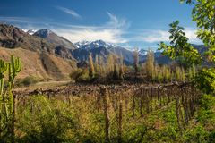 Grapeyard , Vineyard. Elqui Valley, Andes part of Atacama Desert. In the Coquimbo region, Chile. green royalty free stock photo