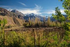 Grapeyard, Wijngaard Elquivallei, het deel van de Andes van Atacama-Woestijn royalty-vrije stock foto
