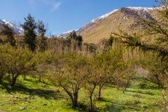 Grapeyard, Wijngaard Elquivallei, het deel van de Andes van Atacama-Woestijn stock foto