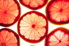 grapfruitskivor Royaltyfria Foton