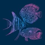 Graphic Aquarium Fishes Set Royalty Free Stock Photo