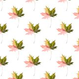 Graphic artistic abstract bright floral herbal autumn green maple leaves pattern vector illustration Royalty Free Stock Images