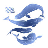 Graphic beluga whale collection Stock Photos