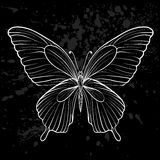 Graphic black and white butterfly. Royalty Free Stock Image