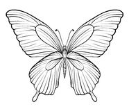 Graphic black and white butterfly. one isolated on white Royalty Free Stock Photos